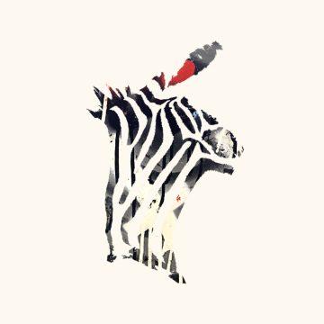Queen Zebra